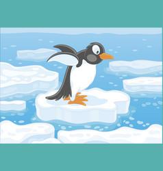 Penguin on an ice floe vector