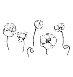 Set of black and white poppies vector image
