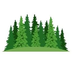 Isolated pine tree plant design vector