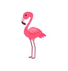 pink flamingo exotic bird summer time cartoon vector image