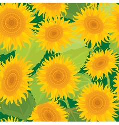 sunflowers seamless 380 vector image