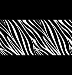 Zebra skin pattern animal print black and white vector