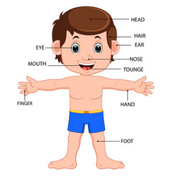 Boy body parts diagram poster vector