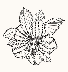 Hawaii hibiscus flower leaf for Coloring book vector image