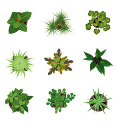 Realistic detailed 3d top view green plants set vector
