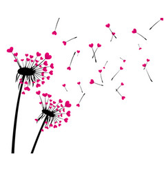 Valentine s background with love dandelions vector