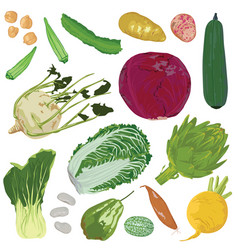 vegetables on white background vector image
