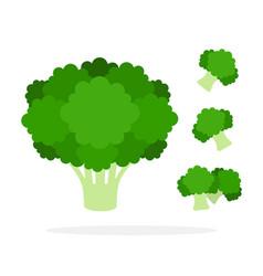 Bush broccoli and pieces broccoli flat isolated vector