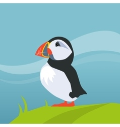 Puffin bird in iceland vector