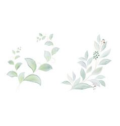 watercolor set green leaves and branches vector image