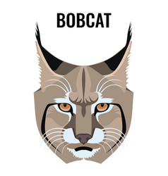 portrait of bobcat isolated on vector image vector image
