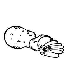 potato slice vector image