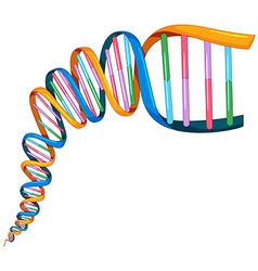 Dna strand in many colors vector