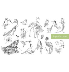 Realistic hand drawn contour collection of vector