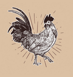 rooster hand draw sketch vector image