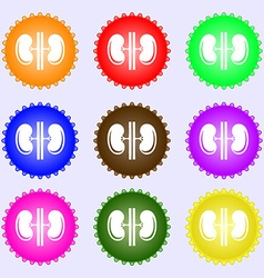 Kidneys icon sign Big set of colorful diverse vector image