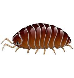 A woodlouse vector image