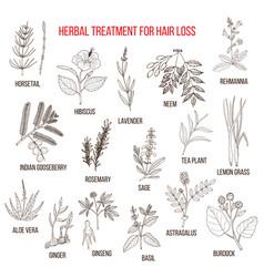 Medicinal herbs for hair loss treatment vector