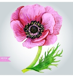 Pink anemone vector