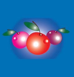 Three large cherry glare vector