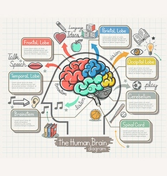 The Human Brain Diagram Doodles Icons Set vector image