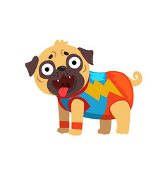 funny pug dog character in a superhero costume vector image