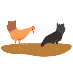 hens eating food from ground chicken with wheat vector image