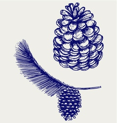 Pine branch with cones vector image
