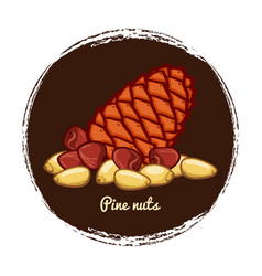pine cone with nuts hand sketched nuts vector image