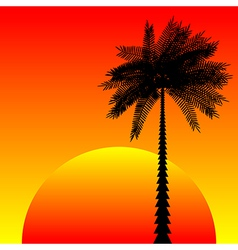 Tropic sunset vector
