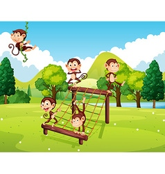 Monkeys playing on climbing station vector image vector image