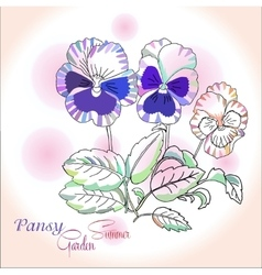 Pansy on pink background vector