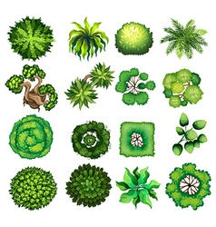 Top view of different kind of plants vector image vector image