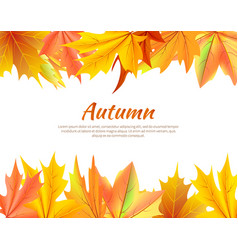 autumn background with leaves at top and bottom vector image