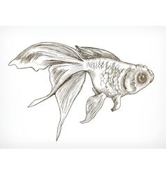 Gold fish sketches vector