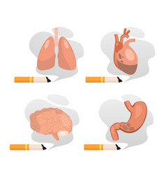 harm smoking to lungs stomach brain heart set vector image