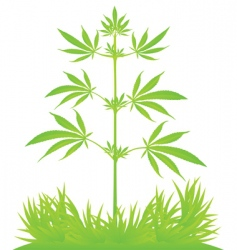 isolated cannabis plant vector illustration vector image
