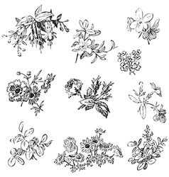 Meadow flower and leaf set isolated on white vector image vector image