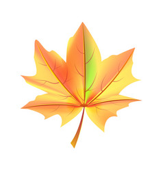 leaf orange and green color autumn fallen object vector image vector image