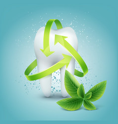 tooth with mint vector image vector image
