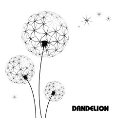 Abstract flower dandelion vector image