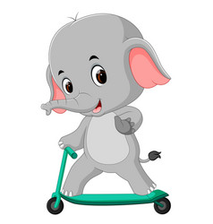 Cute elephant riding push scooter vector