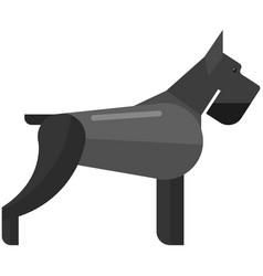 Dog giant schnauzer isolated icon vector