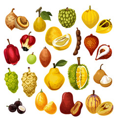 Exotic tropical fruits icons vector