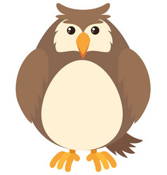 brown owl on white background vector image vector image