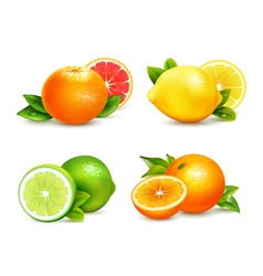 Citrus Fruits 4 Realistic Icons Set vector image vector image
