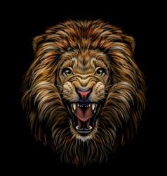 Color portrait a growling lion on a black backg vector