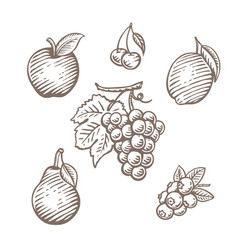 Hand drawn fruit set vector