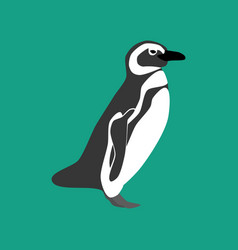 penguin bird vector image
