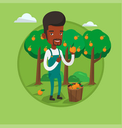 Farmer collecting oranges vector